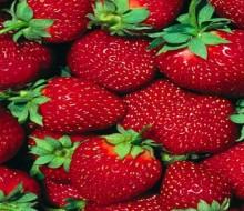 Cultivo de frutilla: convocatoria a productores y técnicos
