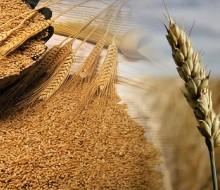 Argentina recupera posiciones en la exportación de trigo