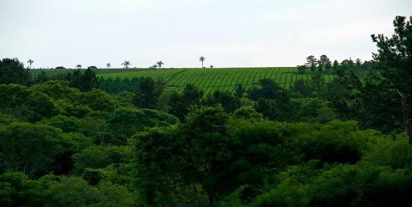 Misiones: la tierra del té